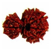 Garbh Gauri Rudraksha Greater Kailash